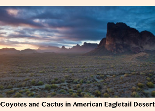 Pic 1. Coyotes and Cactus in American Eagletail Desert